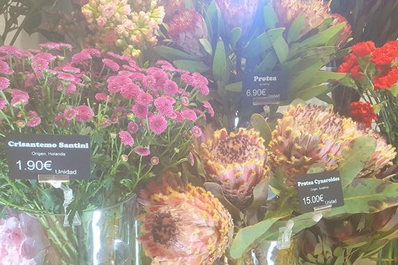 Edikio solución portaprecios para floristerías
